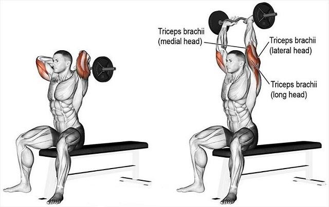 Hướng dẫn luyện tập các bài tập cơ tay sau hiệu quả